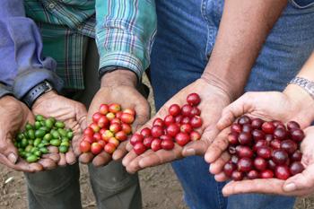 Open-Roasting-Day-Coffee-